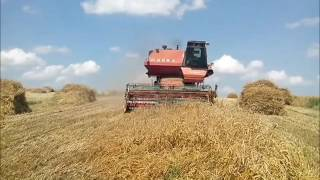 Żniwa pszenicy z kombajnem Niva SK-5 M1 ☆ Збираємо пшеницю комбайном Нива СК-5М-1 ㋡ NazarFarmer