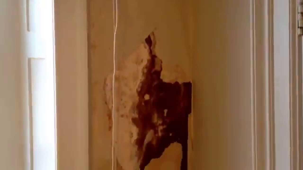 Bathroom Wall Repair Handyman Posh Bathroom Water Damage Wall Repair Youtube