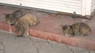 Спящие коты на набережной. Алушта (Крым) 4 февраля 2016