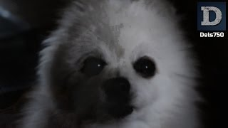 Gabe The Dog - Horror