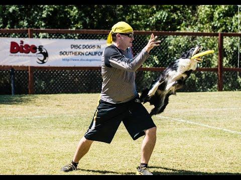 Frisbee Dog Reverse Hip Vault Trick Training