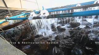 Phuket Abalone Group Farm