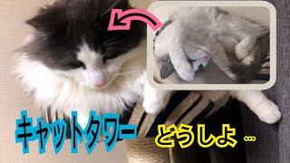 大型猫の宿命ですかね…キャットタワー小さいんだわ( ˊᵕˋ ;) ぐらぐら揺...