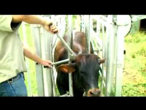 Boshoff Beyers Farmfreund Animal Husbandry