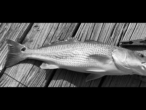 Fresh Caught Red Fish Cook In Aluminum Foil Packets On Grill