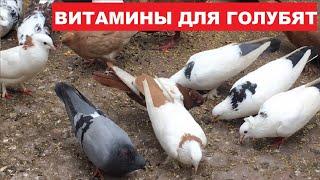 Витамины для голубят