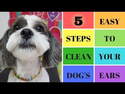 Five Easy Steps To Clean Your Dog's Ears