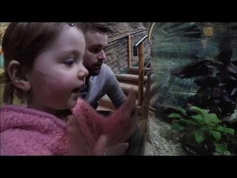 Bournemouth Oceanarium 17/03/17