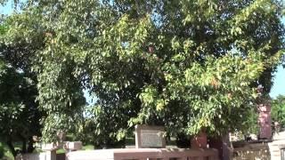 [아제여행사] 인도8대성지순례 : 깨달음의 땅 부다가야…