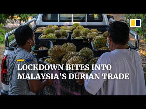 Malaysia's durian trade hit by coronavirus pandemic as lockdown slows local sales