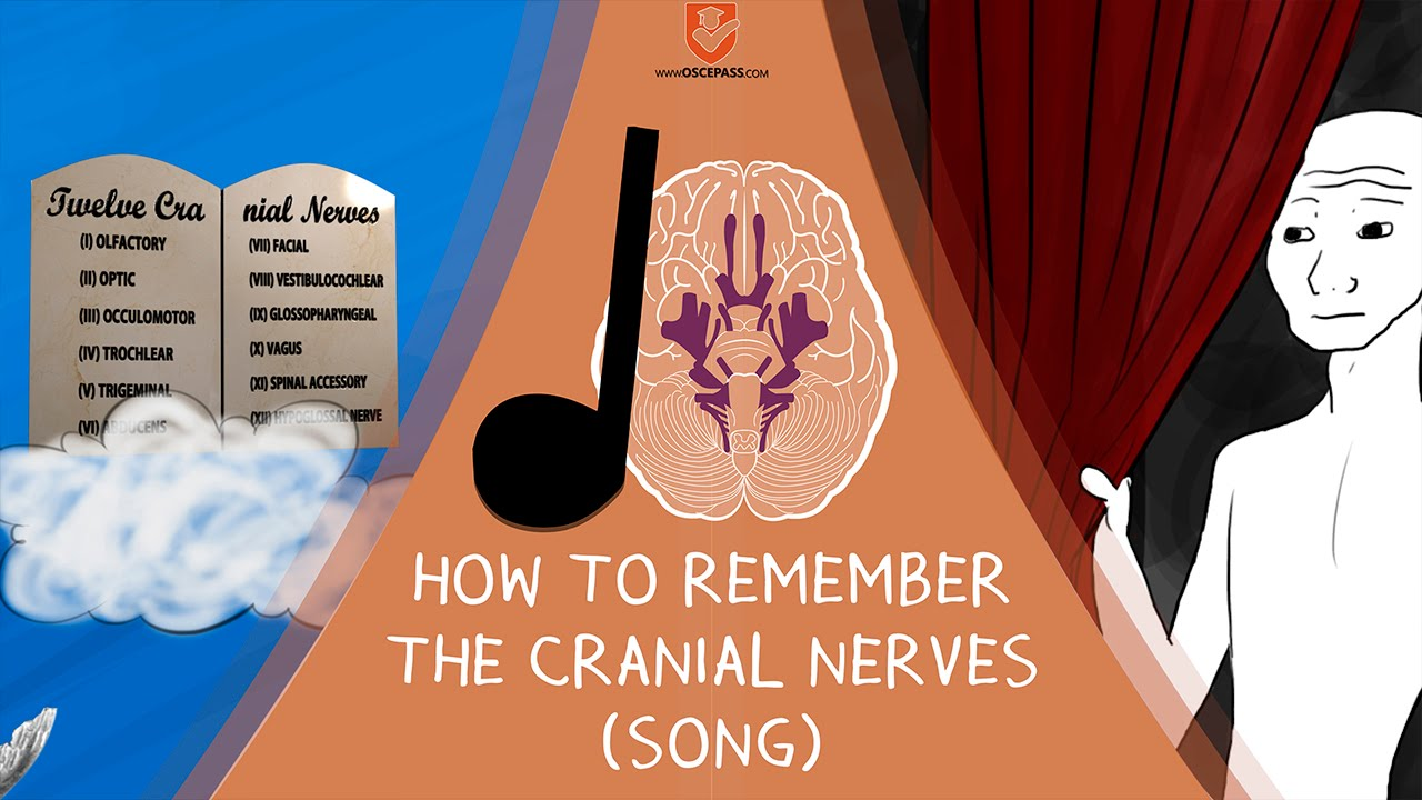 How to Remember The Cranial Nerves (Song)   OSCE PASS ...