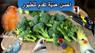 أهمية وفوائد البروكلى للطيور