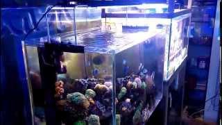 Kelo Led Aquarium Light Ak200s