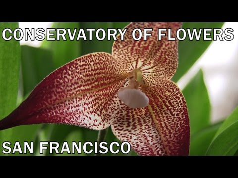 Conservatory of Flowers • Golden Gate Park • San Francisco