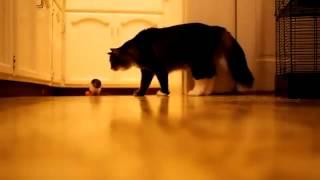 Мышь как собака Кормушка Уникальное Фото Видео Приколы Гифки