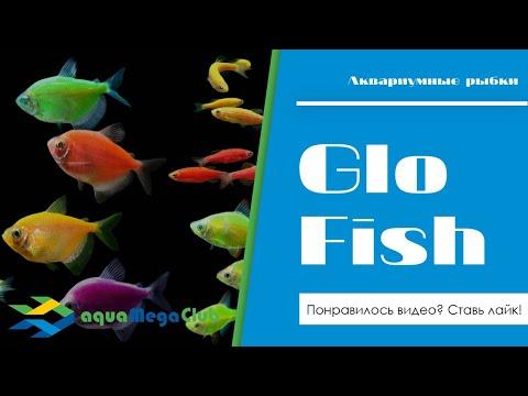 Как нас обманывают продавцы Глофиш (GloFish) и как отличить подделку?!