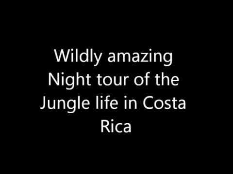 night tour Costa Rica Jungle
