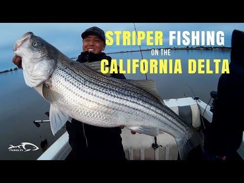 Striper Fishing On The California Delta