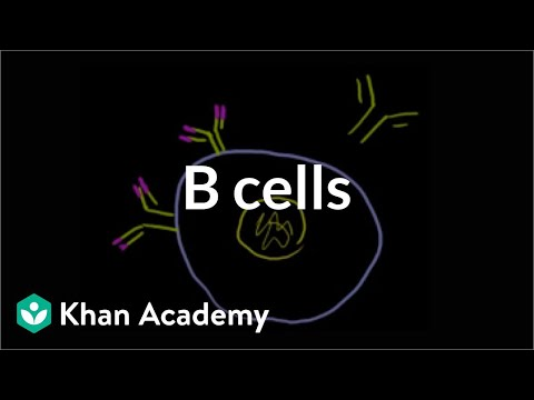 B lymphocytes (B cells) | Immune system physiology | NCLEX-RN | Khan Academy
