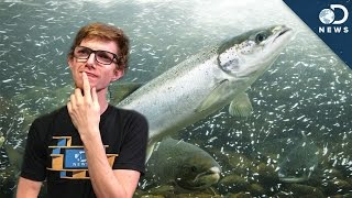 Fish Sperm Is Way More Useful Than You Think