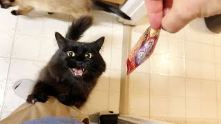 My cat gets so talkative when he wants special treat from Japan - super cute