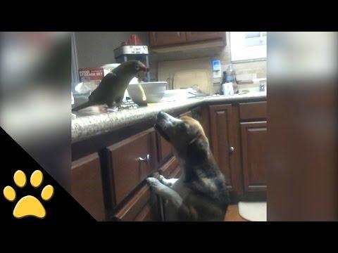 Bird Feeds Spaghetti to a Dog