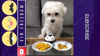 MOST Cute and Funny Dogs of 2018 | We are Love Dog !!