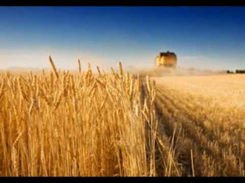 Anonymous: Genetically Modified Australia