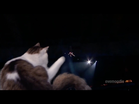 Cat Attack at the Super Bowl