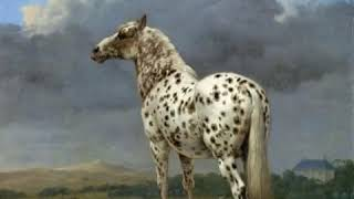 Клип: Лошади