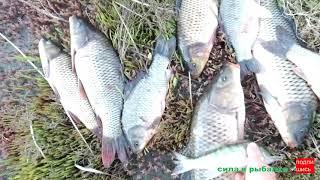 Рыбалка на берегу клев средний но рыбы наловили
