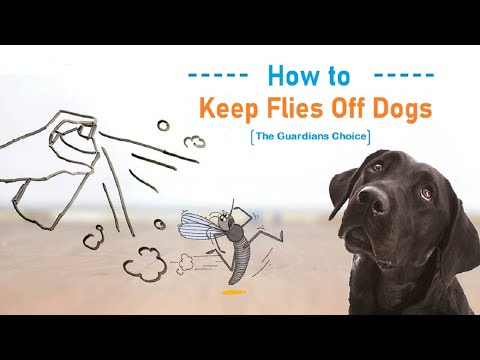 How To Keep Flies Off Dogs - The Guardians Choice