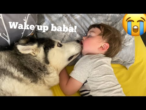 Husky Wakes Baby Up In The Cutest Way Possible!! [TRY NOT TO SMILE!]