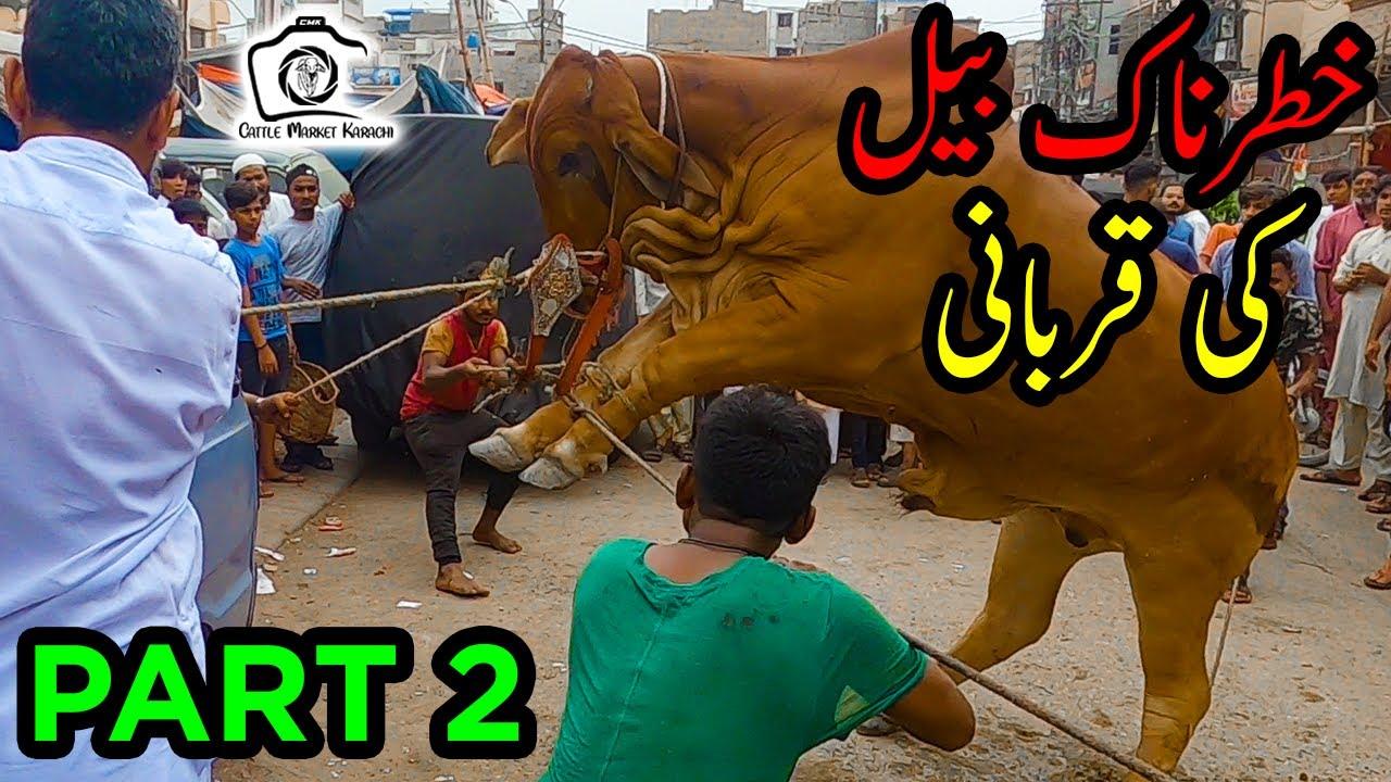 Khatarnak Bull Ki Qurbani Part 2 | HEAVY Bull Qurbani | Bakra Eid 2021 | Eid ul Adha 2021