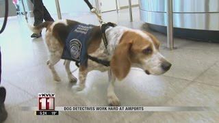 Dog Detectives Work Hard At Airports
