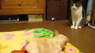 приколы кошки смешные топ видео 2014 животные кошки 32