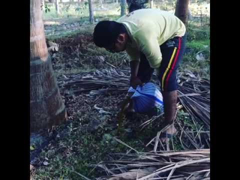 Jeevamirtham Organic Fertilizer For Coconut Trees