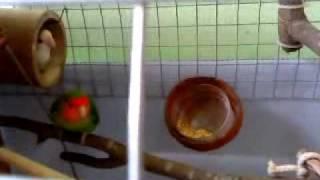 DIY bird cage for lovebirds