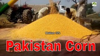 How to Shell Corn & Sale with MF 260 Tractor in Rural Pakistan