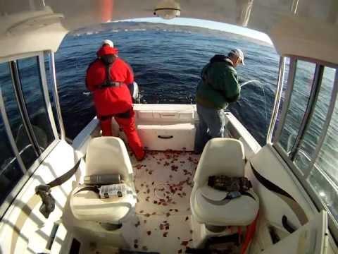 Epic White Seabass Fishing, Santa Cruz, Monterey Bay, West Coast