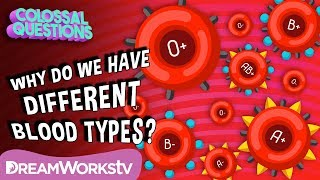 Why Do We Have Different Blood Types? | COLOSSAL QUESTIONS