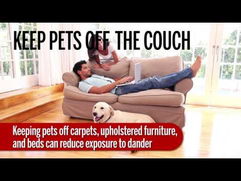 How to control pet allergies in your house