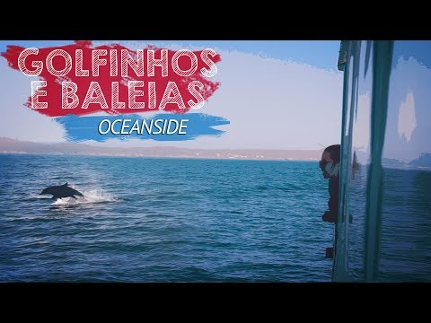 BALEIAS E GOLFINHOS || Oceanside (California, EUA)
