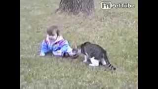 Кошки и дети. Смешное видео
