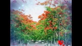 Thương ca mùa hạ - Minh Tuyết