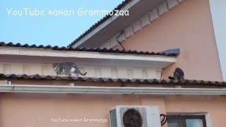 Кошки живущие на крыше.
