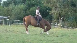 Loulou liberté monté au milieu des autres chevaux
