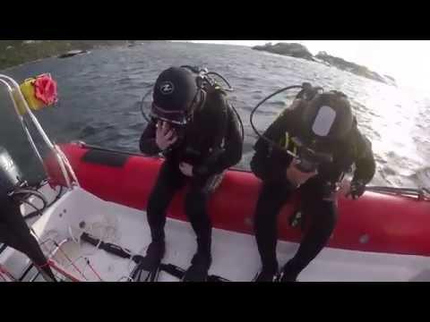 SCUBA Diving with Cape Fur Seals in Cape Town