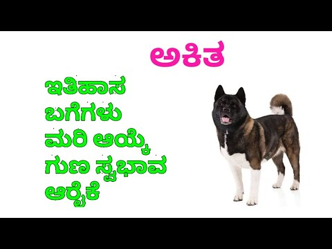 Akita purity , care in Kannada