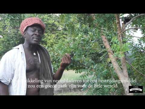 Neem as an Organic pesticide /Neem als Biologisch bestrijdingsmiddel